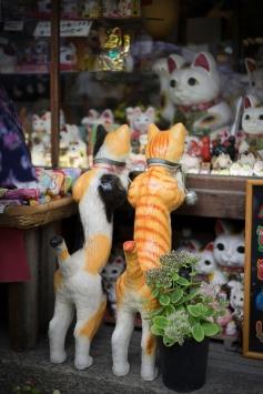 Neko Window Shopping, Higashiyama, Kyoto, Japan