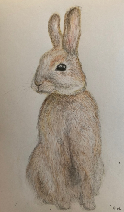 Hare in Watercolour Pencil, March 2018