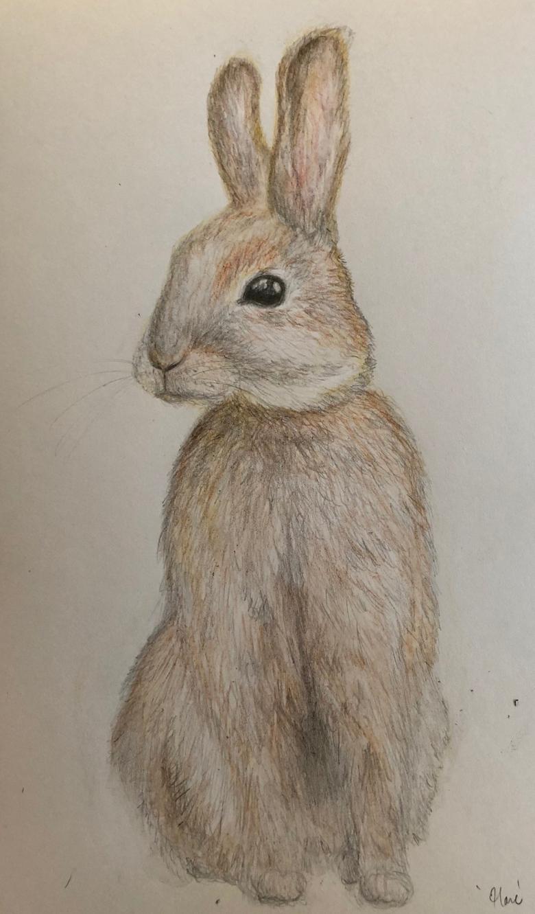 Hare Miko Mayer