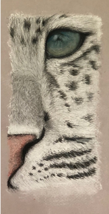 Snow Leopard in Pastel, March 2018